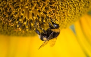 Drone Industry Research and Bees